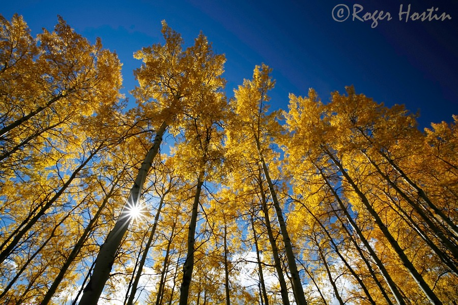 WEB 2010 09 27 Aspen Trees 395 copy